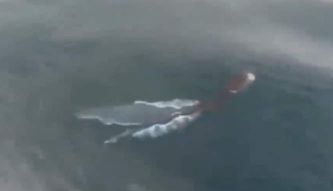В Таиланде засняли в воде очень странное существо