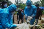 Вспышка вируса Нипах в Керале после смерти 12-летнего ребенка
