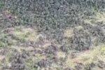 Тысячи мертвых птиц таинственным образом падают с неба на Бали, Индонезия