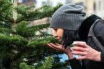 Российские ученые обнаружили «эликсир молодости» в сибирской пихте