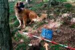 Собака откопала в лесу клад