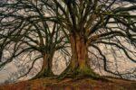 Почему человеческие языки можно сравнить с ветвями на дереве и помочь найти единого общего предка